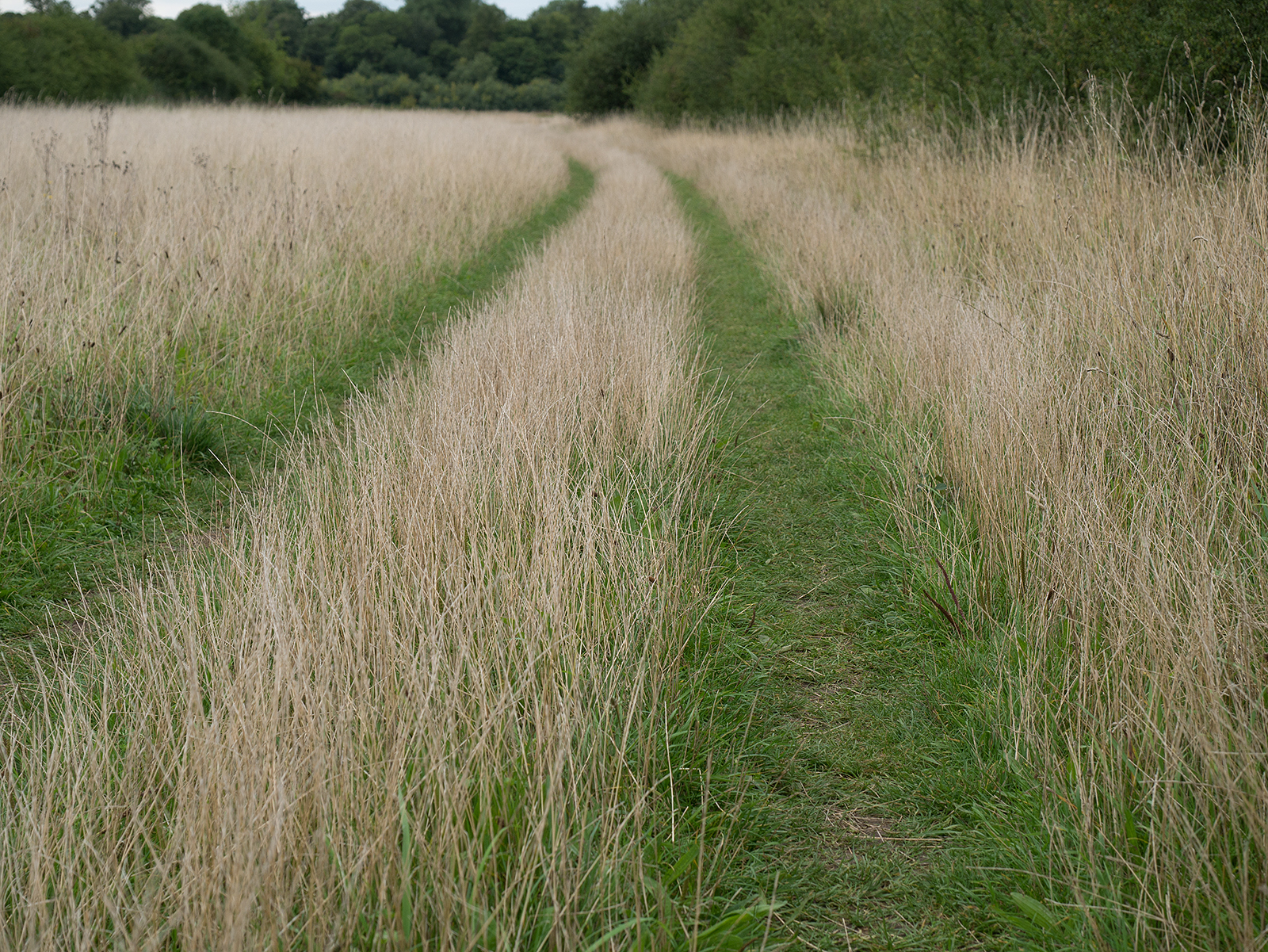 Heading north through the meadow