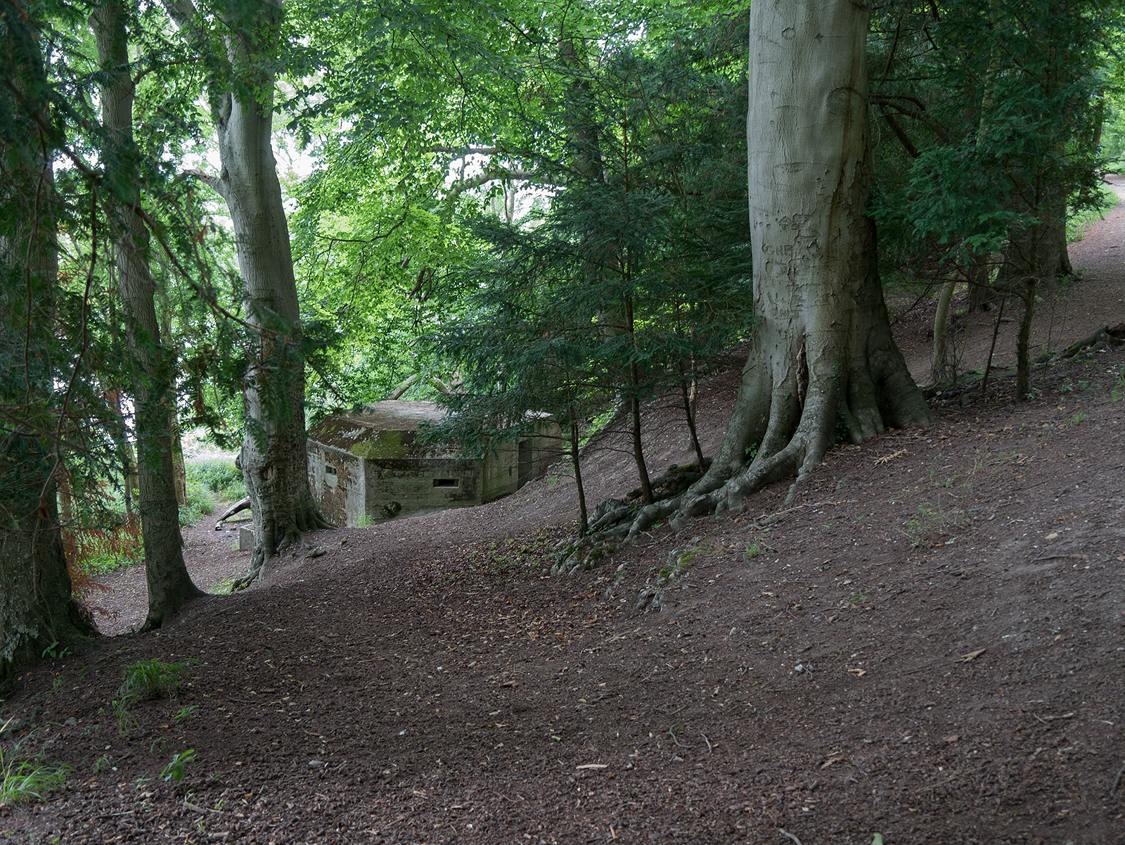Emplacement in Hartslock Wood