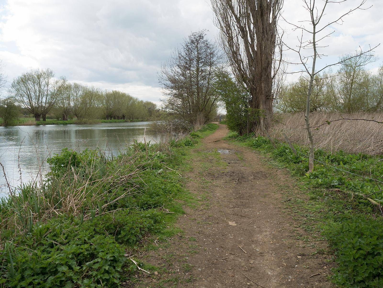 The path away from Benson Marina - a little earthen again.