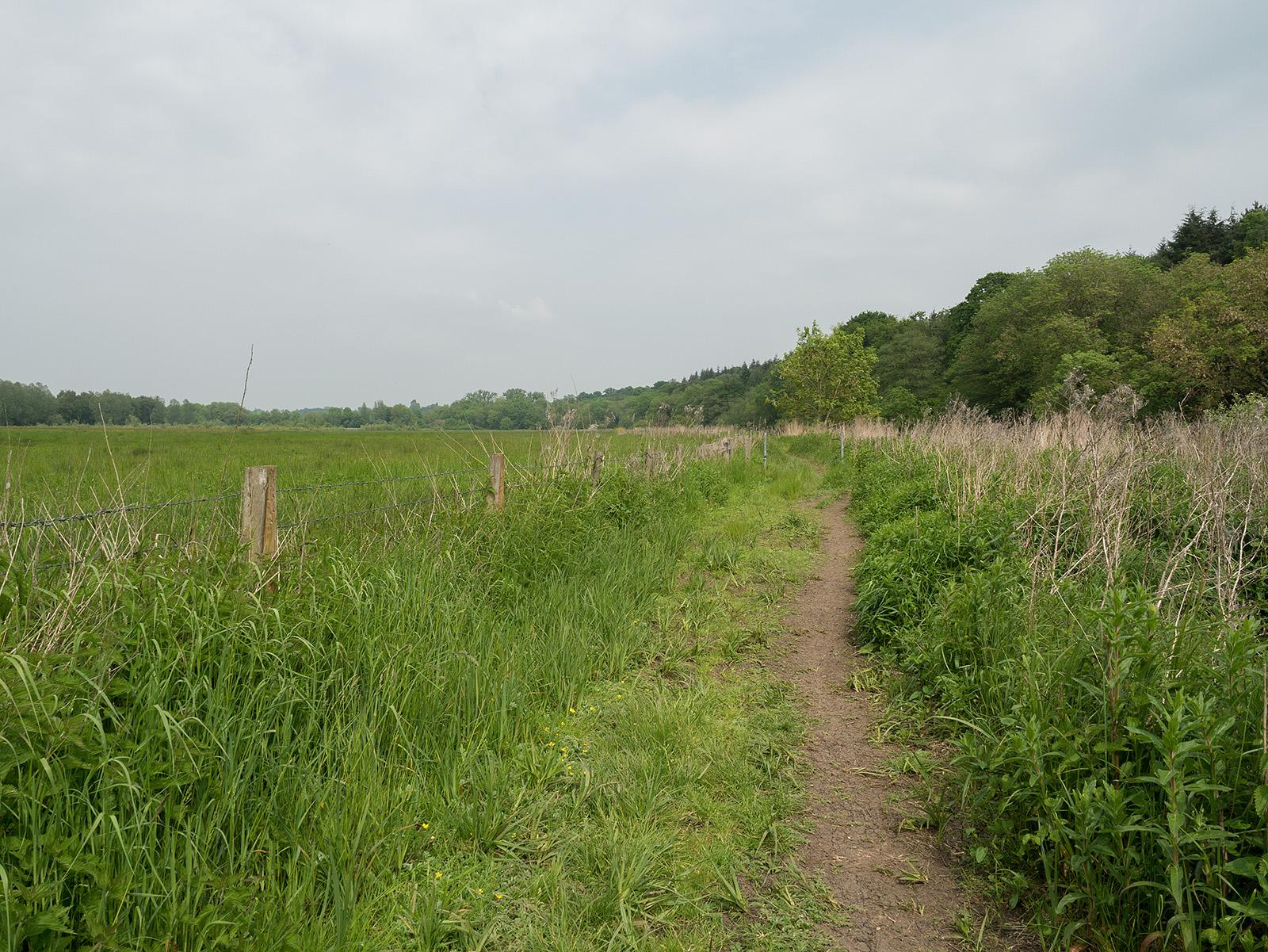Muddy path heading north east
