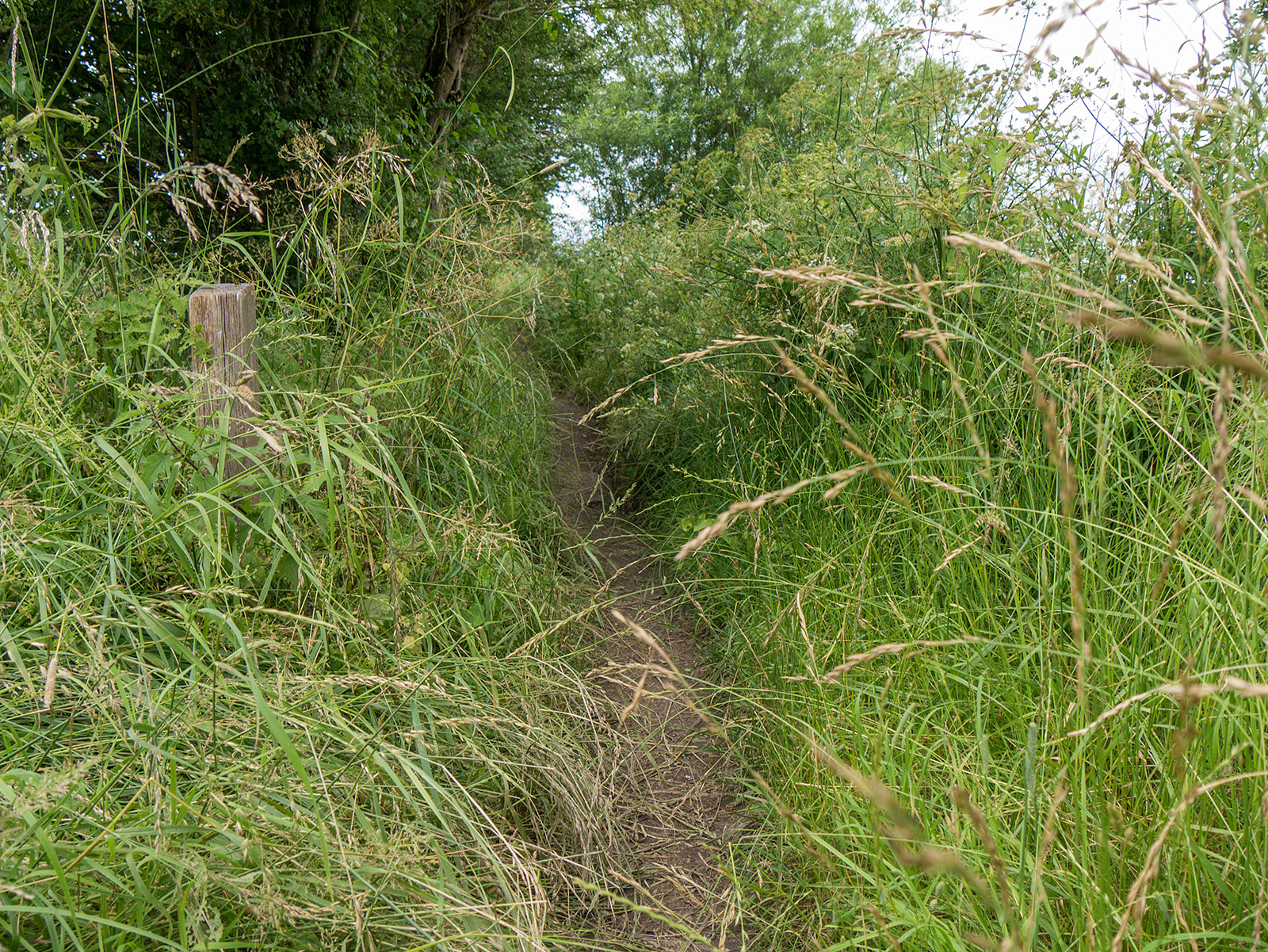 The path in many areas is overgrown by grasses both sides - in the rain that came later, these soaked the bottom of my trousers