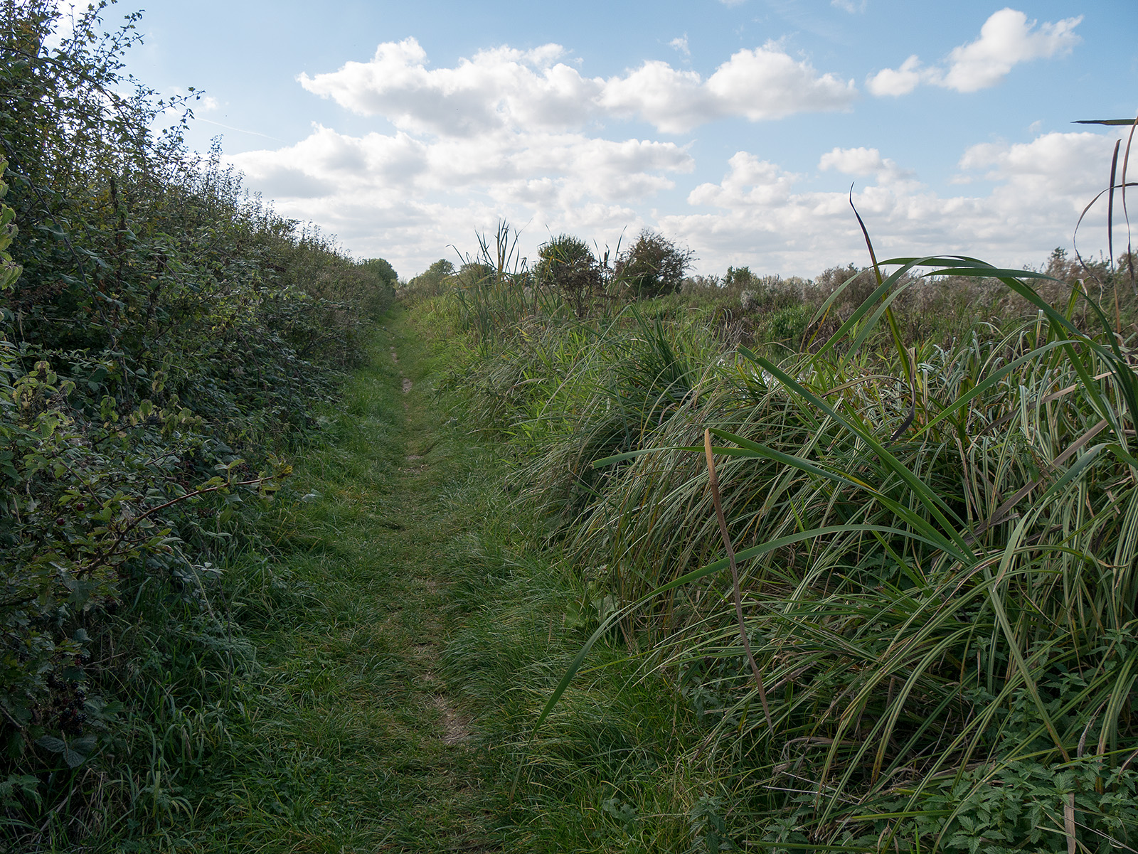 In places, the gravel path gives way to grass and the reeds and hedge overhang a little.