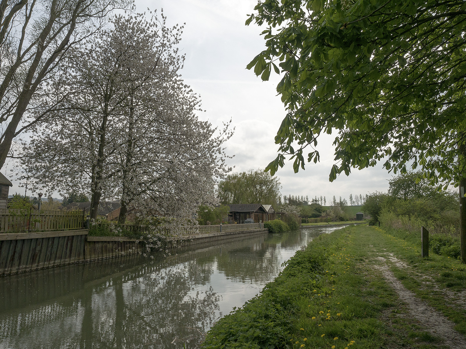 Tree blossom after Gamnel bridge