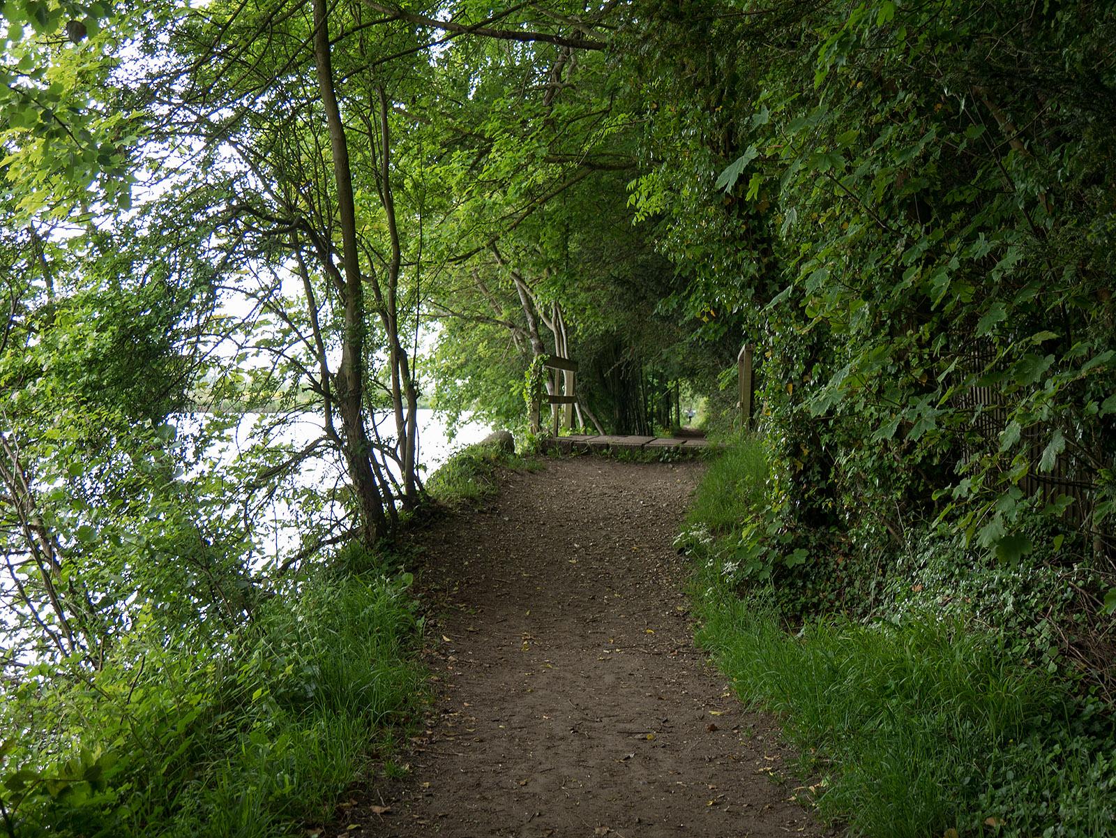 Overgrown footpath south of Shiplake Lock