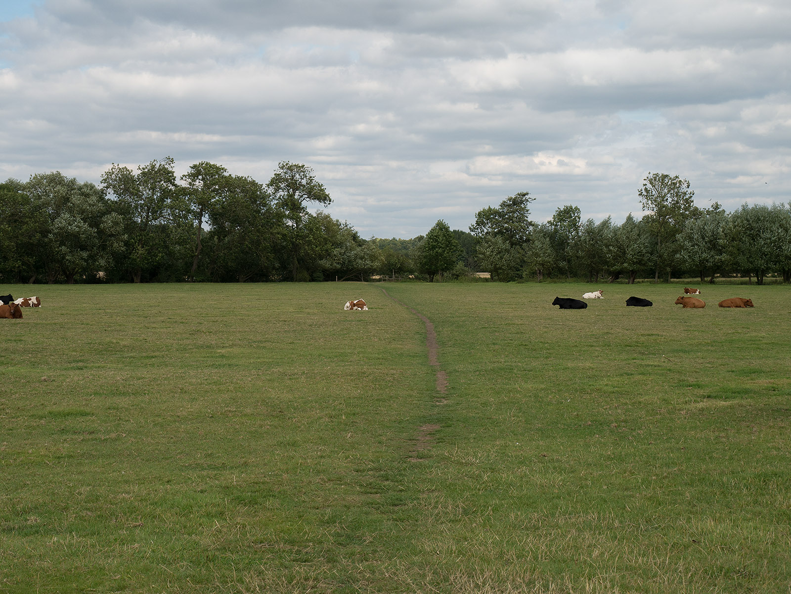 Looking back across the field where we have diverted inland towards Culham Court
