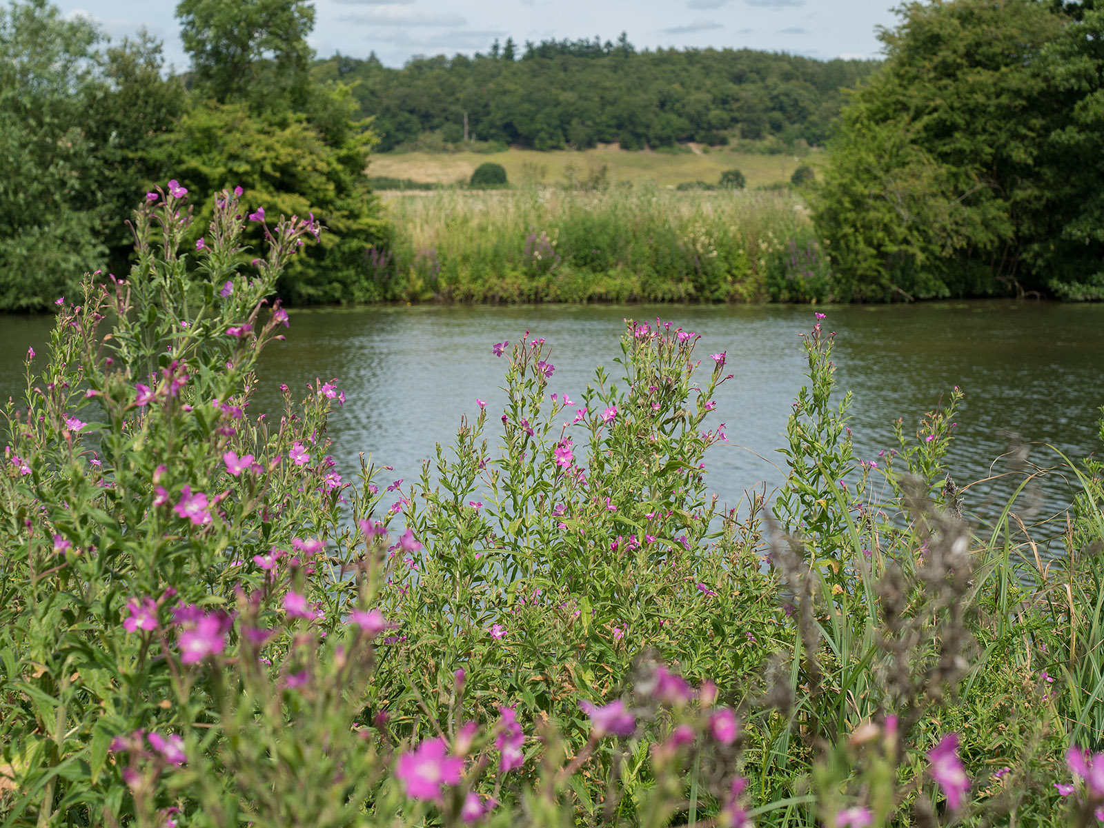 Flowers, river, meadows and hills