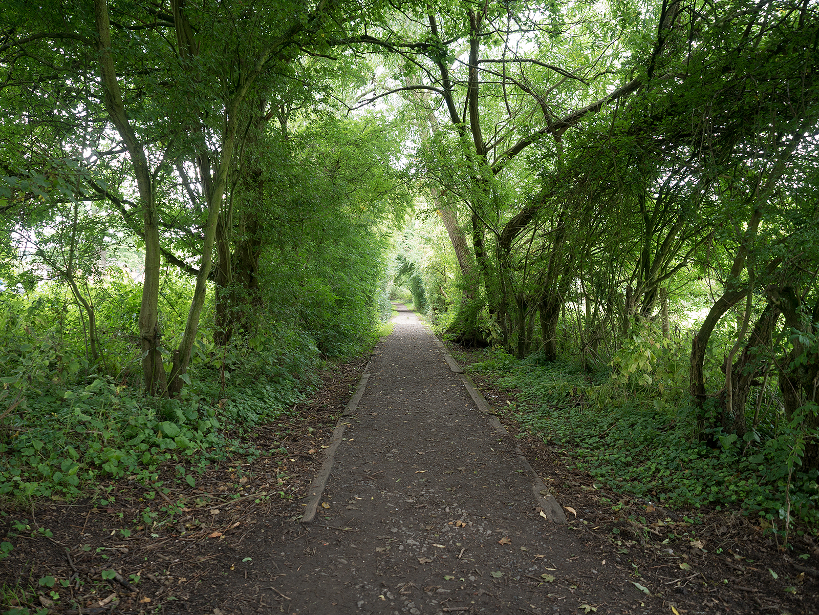 Path towards the river north of Goring weir