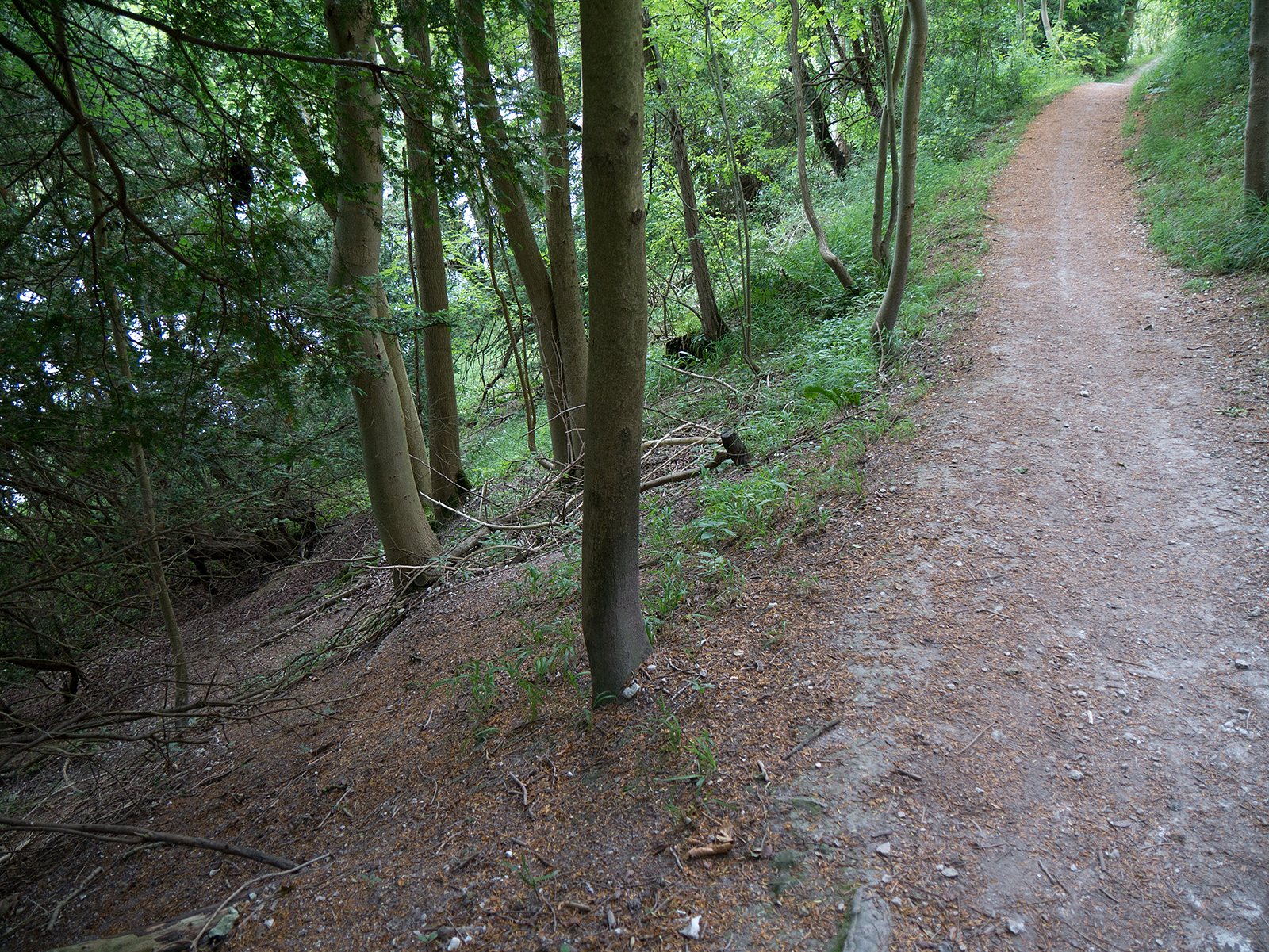 Beware the steep slope to the side of the path in Hartslock Wood