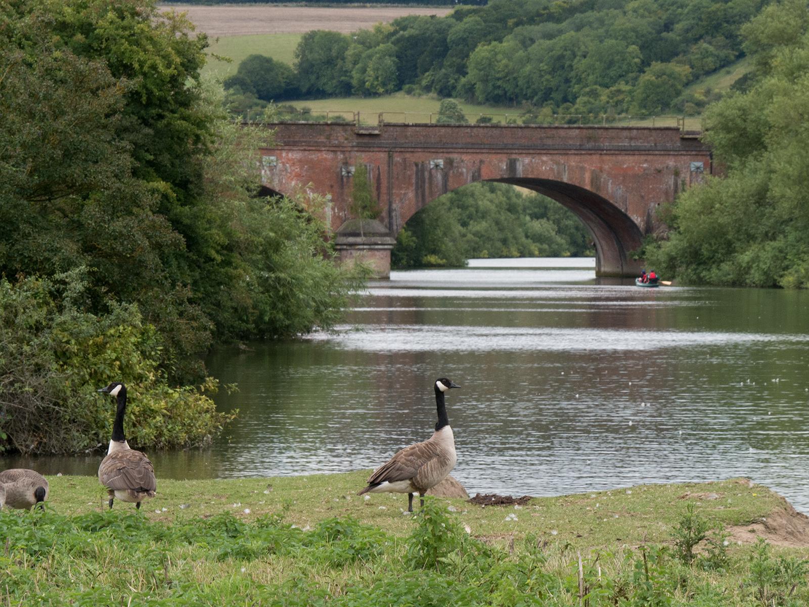 Looking back to the railway bridge