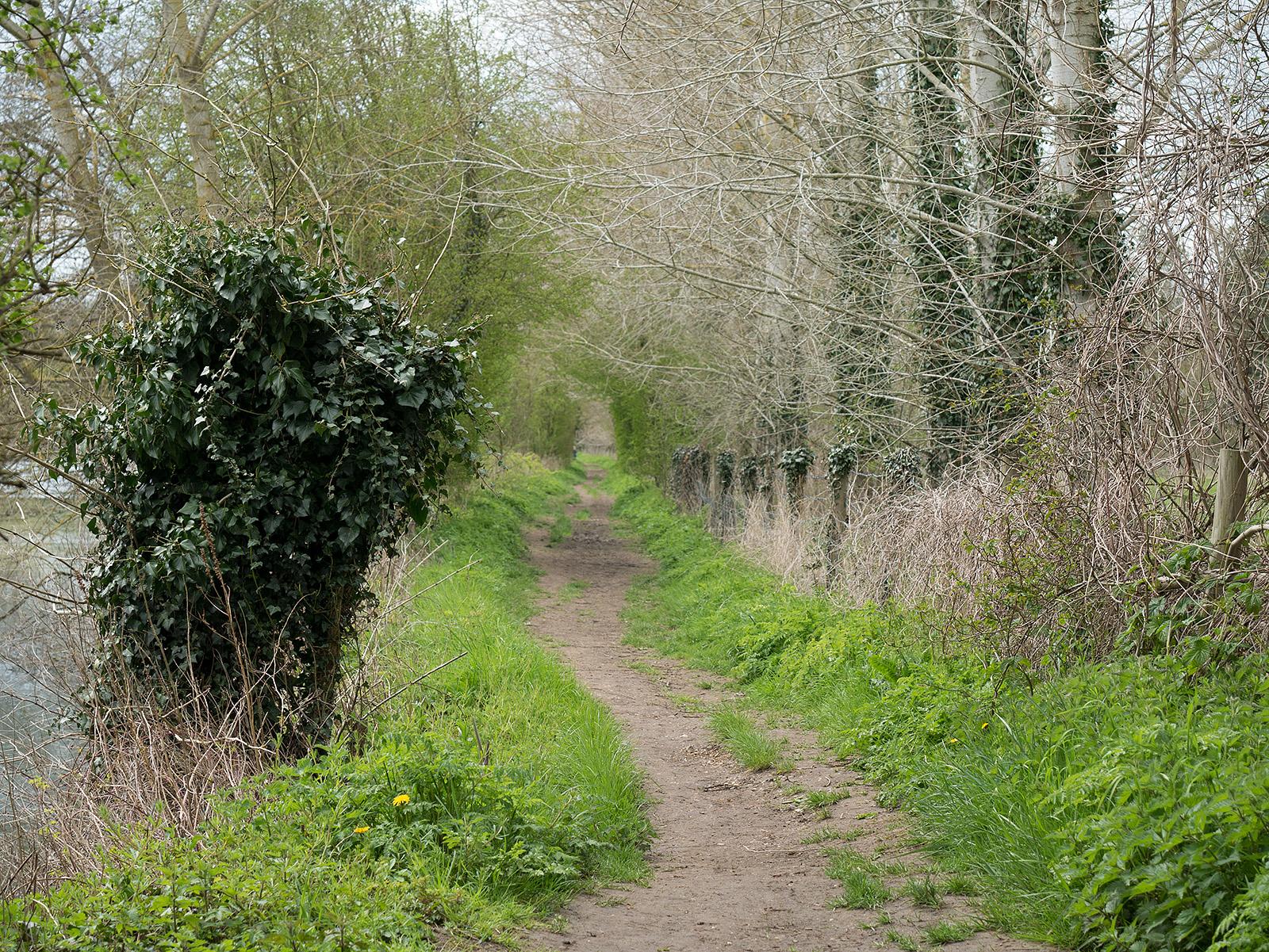 Heading towards Shillingford bridge - enclosed pathway.