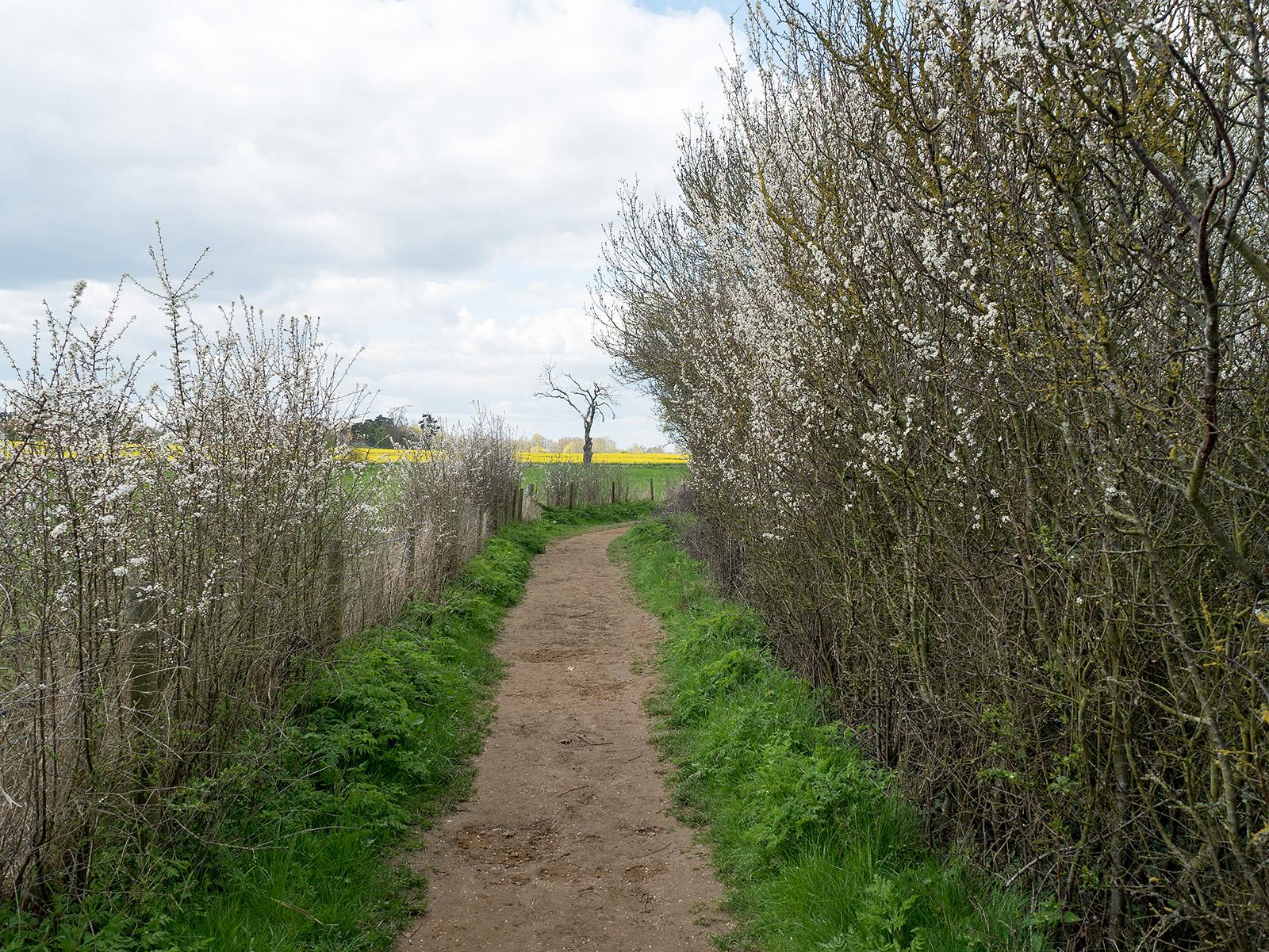Springtime on the path.