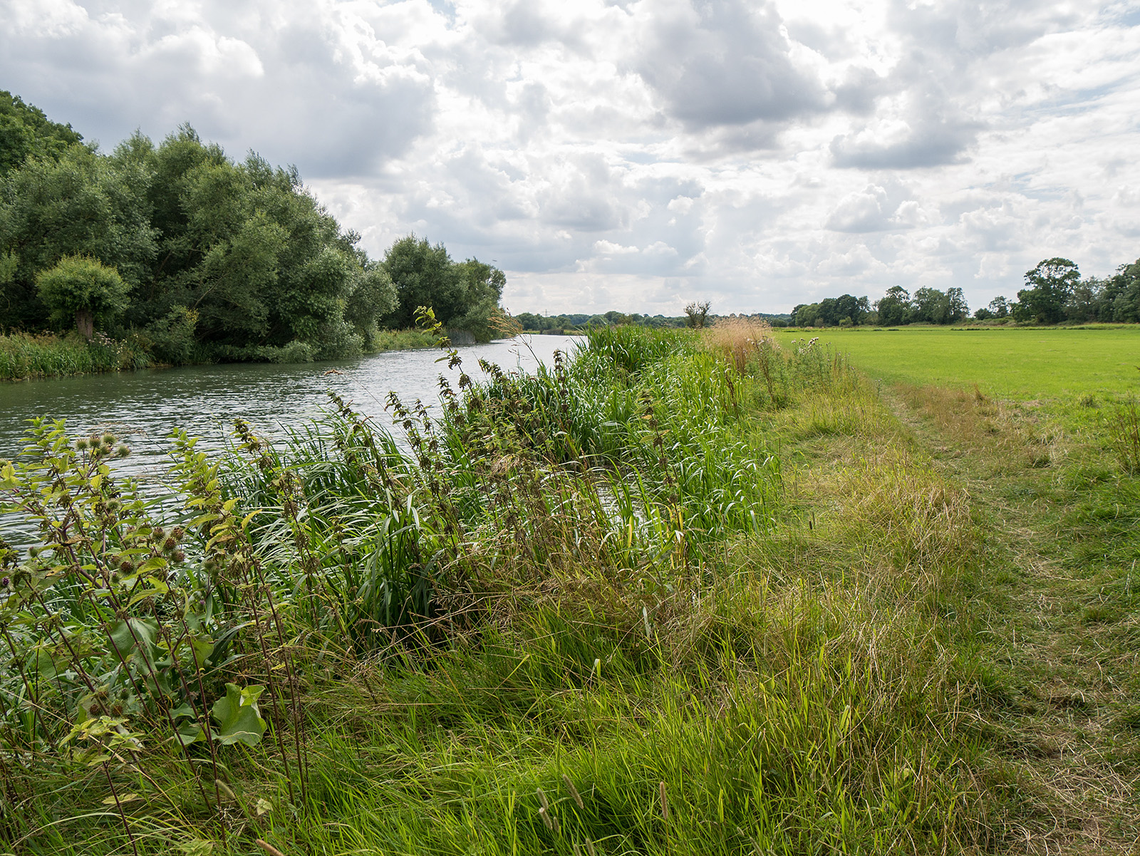 A straight patch of river with rushes by the side