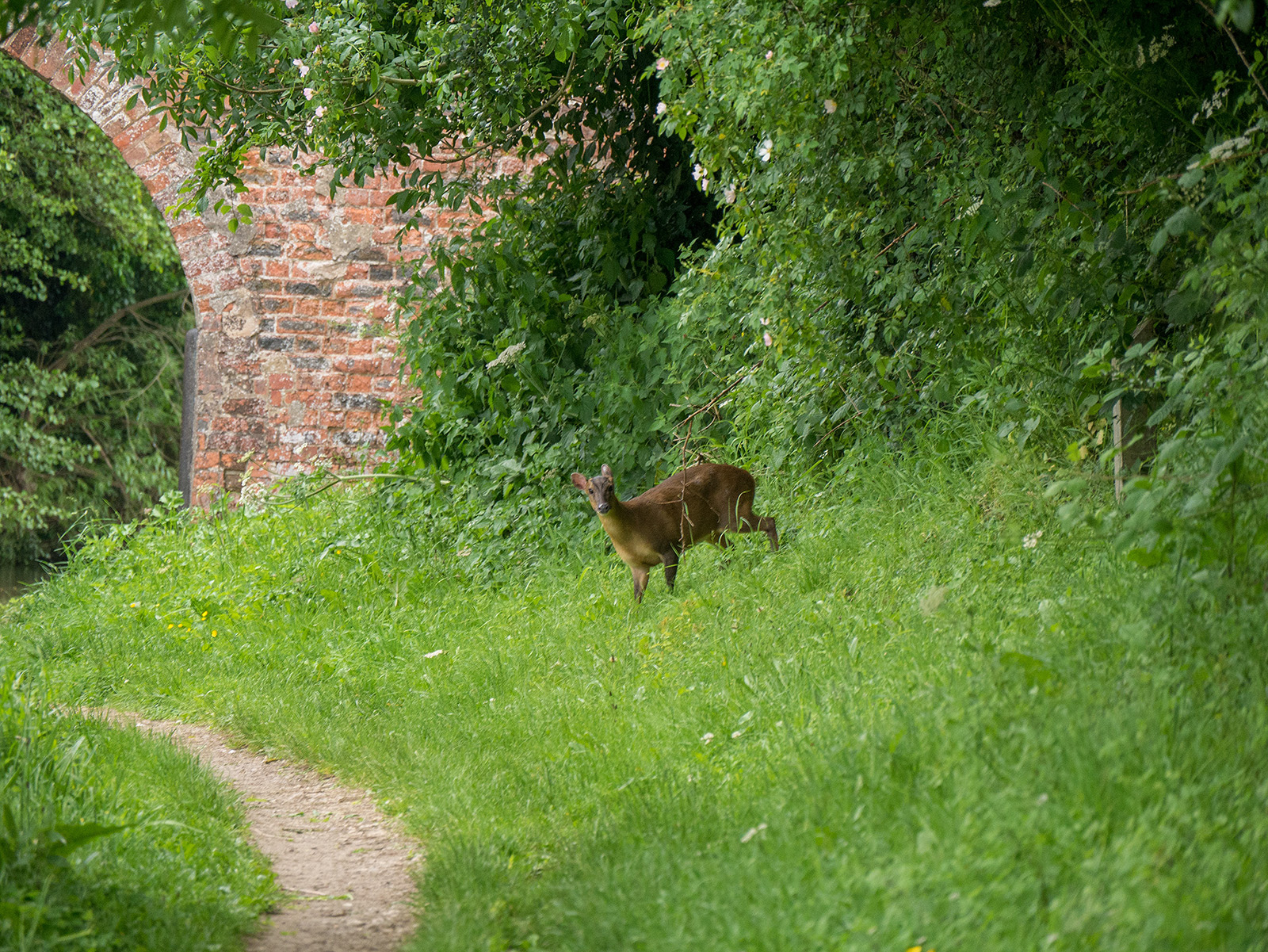 Oh deer - something's taking a sneaky look at the canal!